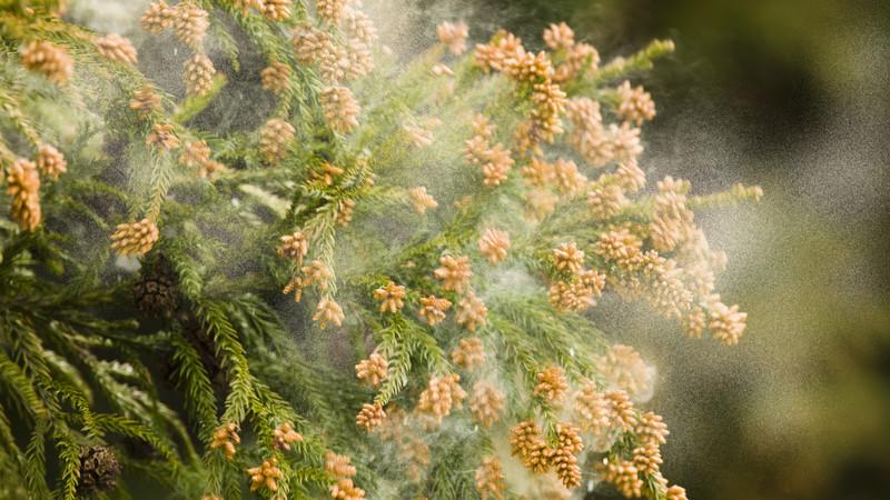 花粉症は糖質制限でなくなる?