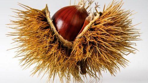 秋は栗の季節。栗の糖質を知っておこう