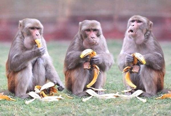 【@(・ェ・)@バナナうめぇwww】人間だけじゃない…最近では動物までも糖尿病になっている…【@(・ェ・)@しょんべんあめぇwww】