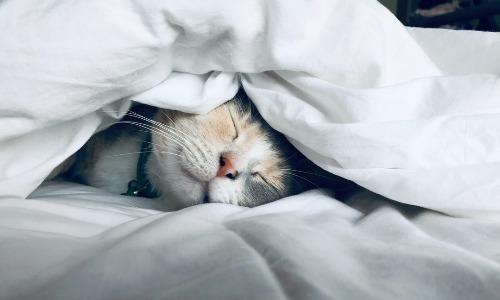 糖質制限をすると眠くなる?