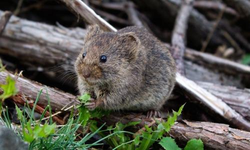【肥満は】太ると甘いものが欲しくなるわけがマウス実験で分かった?【加速する】